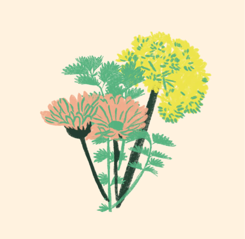 illustration de plantes comestibles