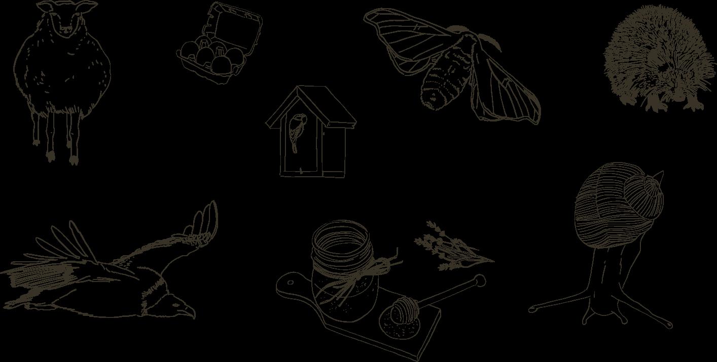 illustration d'animaux pour le magazine du petit baronniard