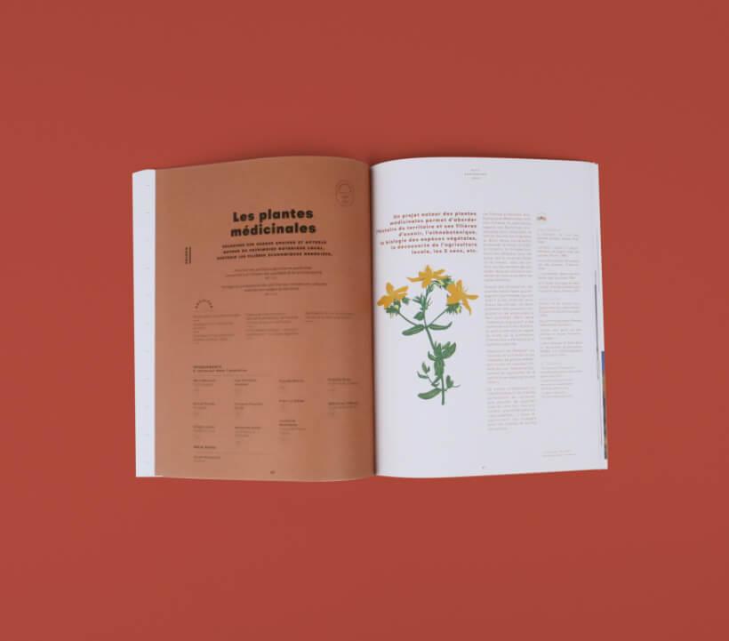 fiche pédagogique - mise en page et illustration sur les plantes médicinales