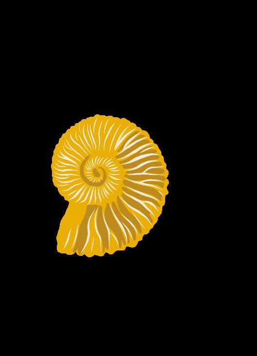 illustration de fossile pour la publication pédagogique du pnr des baronnies provençales
