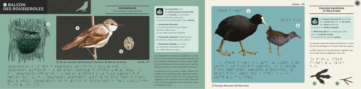 plaque pédagogique illustrée sur les oiseaux du marais