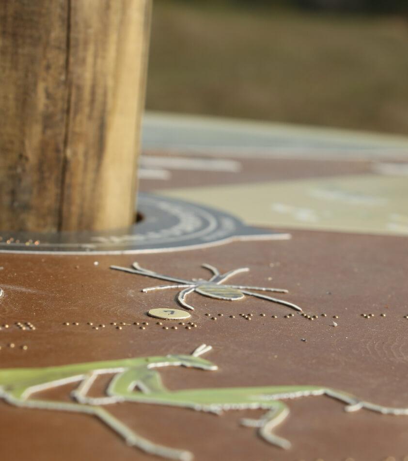 création d'illustrations en relief pour le marais de l'étournel