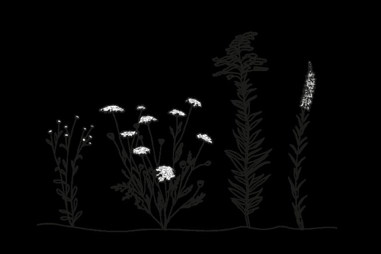graphisme pour présenter la flore du marais